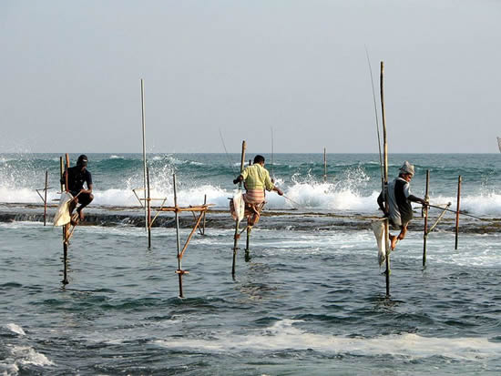 Pêcheurs sur échasses près de Unawatuna, Sri Lanka. Stilts fishermen near Unawatuna, Sri Lanka. Photo by Bernard Gagnon